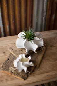 organic ceramic planters