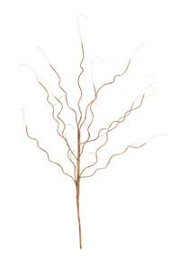 botanica #773
