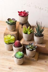 Set of 8 Miniature Succulents