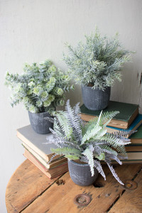 fern succulents with grey pots
