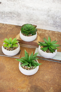 Set of 4 Artificial Succulents in Low Round Cement Pots
