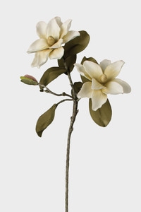 latex magnolia botanica flower