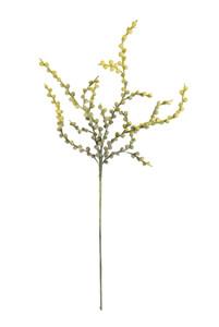 botanica #2100