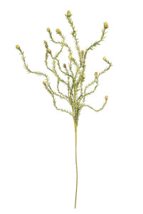 botanica #2124