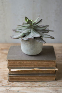 SUCCULENT WITH CEMENT POT